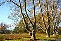 Trees at Duke Farms, Hillsborough.jpg
