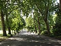 Trees shade Regent's Park Broad Walk - geograph.org.uk - 921109.jpg