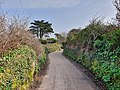 Trenwith Lane, St Ives, March 2021.jpg