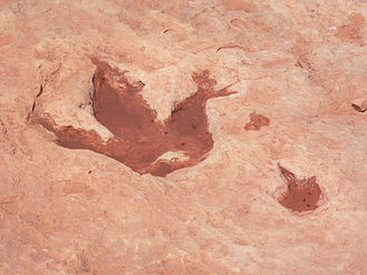 Tuba City, Arizona - Dinosaur track in Tuba City
