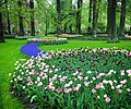 Tulips at Keukenhof gardens.jpg