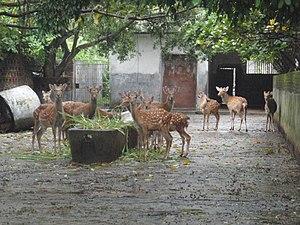 Tunchang County - Tunchang deer farm