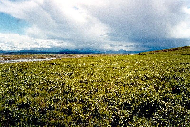 File:Tundra ANWR.jpg