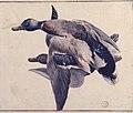 Two Dead Ducks. MET 80.3.204.jpg