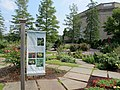 U.S. Botanic Garden in July (23428024459).jpg