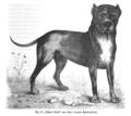 Ulmer Hund 1794.png