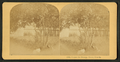 Under the orange trees, Florida, from Robert N. Dennis collection of stereoscopic views 2.png