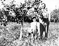 Unidentified man and boy standing in the orchard of the Warren family farm, Bellevue, Washington, ca 1905 (WASTATE 1810).jpeg