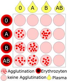 Blutgruppe a rh positiv