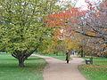 University Parks, Oxford, Autumn 2006.jpg