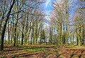 Unnamed Beech Wood on Becket's Down - geograph.org.uk - 353206.jpg