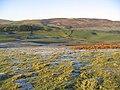 Upland grazing - geograph.org.uk - 298254.jpg