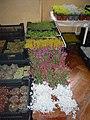 Výstava květin doplněna o prodej řemeslných výrobků v Pohledu 09.jpg