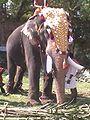 Vela elephant.jpg