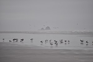 Copalis National Wildlife Refuge - Image: View to Copalis Rock from Roosevelt Beach, WA 14
