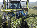 Vigne Pinot Noir (Efeuillage) Festigny Cl.J.Weber20 (23382056400).jpg