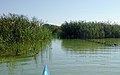 Waginger See Ausfluss zur Götzinger Achen.jpg