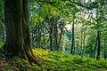 Waldstück.jpg