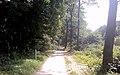 Waldweg, Stadtwald, Neuss.jpg