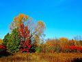 Warner Park during Autumn - panoramio (4).jpg