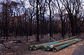 Waroona fire 2016 gnangarra 230116-108.JPG