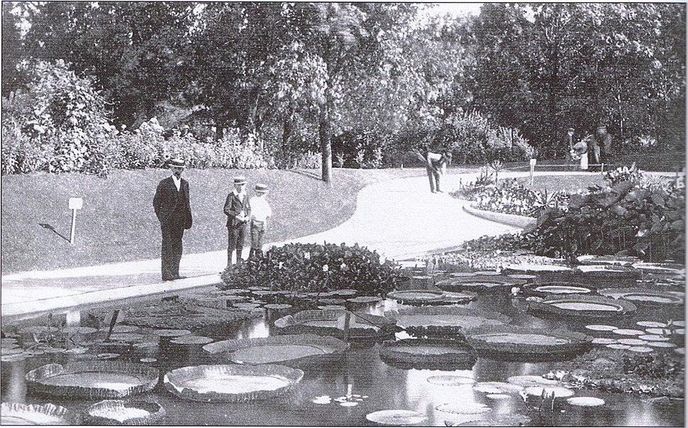 Washington Park Lily Pond