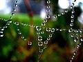 Web (261084036).jpg