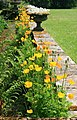 Welsh poppies, Browsholme Hall - geograph.org.uk - 829292.jpg