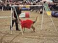 West Lancs dog display team, Southport 6.JPG