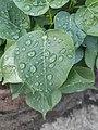 Wet Leaves 2.jpg