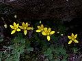 Whf yellow 45.jpg