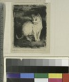 White cat, seated (NYPL b14923835-1227099).tiff