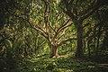 Wild tree in nature.jpg