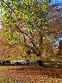 Winchester in Autumn, England; November 2020 (07).jpg