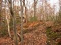 Winter in Oldbury Woods - geograph.org.uk - 478421.jpg