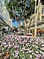 Winter in Queen Street Mall, Brisbane, 2021, 01.jpg