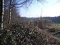 Winterliche Hecken am Teutoburger Wald.jpg