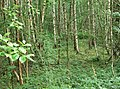 Woodland at New Lount Nature Reserve - geograph.org.uk - 917022.jpg
