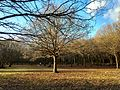 Woodlands north of Monken Hadley Common bridle path 03.jpg