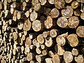 Woodlogs (Salland ridge, Netherlands 2008) (2490045174).jpg
