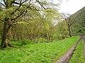 Woods, Breich - geograph.org.uk - 167075.jpg