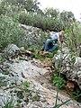 Yagur – Nesher, the Green Path – Mount Carmel 106.JPG