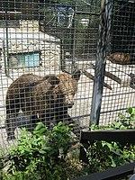Yalta Zoo 01.jpg