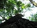 Yggdrasil - panoramio.jpg