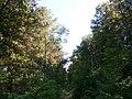 Zolotonis'kyi district, Cherkas'ka oblast, Ukraine - panoramio - юра запеченко (30).jpg