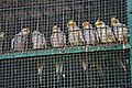 Zoo of Ahmedabad, India (4052612196).jpg