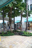 """""""Aloha 'Oe"""" Statue (2854230102).jpg"""