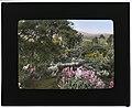 """El Cerritto,"" Edward Larned Ryerson Jr. house, Hot Springs Road, Santa Barbara, California. Valerian along pathway LCCN2007684898.jpg"