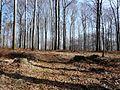 Łaziska Górne, Poland - panoramio (11).jpg