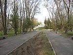 Аллеи Севастопольского парка.jpg